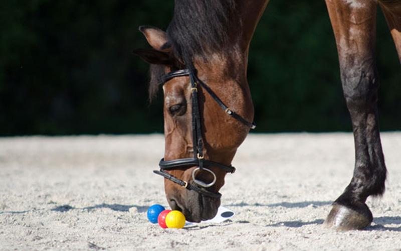 pferd7.jpg